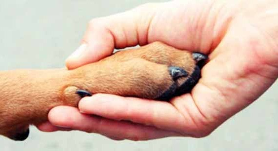 ajuda_aos_animais