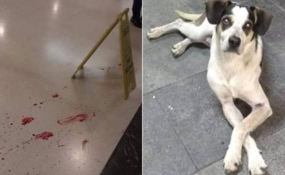 cachorro-osasco-carrefour
